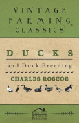 Ducks and Duck Breeding