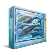 Whales and Dolphins Jigsaw Puzzle for Kids, 100 pieces Eurographics