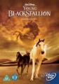 Young Black Stallion [Region 2]