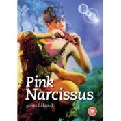 Pink Narcissus [Region 2]