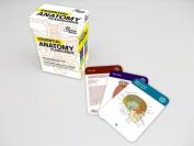 Essential Anatomy Flashcards