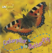 Caterpillar to Butterfly (Life Cycles