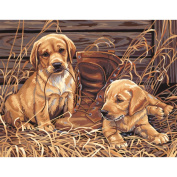Dimensions Paint By Number Kit, 36cm x 28cm , Puppies Plaything