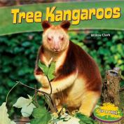 Tree Kangaroos (Up a Tree)