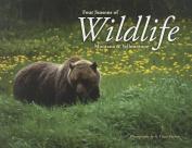 Four Seasons of Wildlife