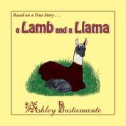 Lamb & a Llama