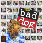 Bad Dog 2013 Wall Calendar