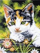 23cm x30cm Junior Paint By Number Kit - Kitten