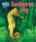 Seahorse Fry (Water Babies)