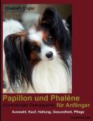 Papillon Und Phal Ne (Kontinentaler Zwergspaniel) Fur Anf Nger