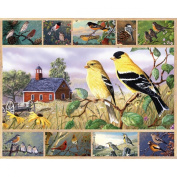 """White Mountain Puzzles Jigsaw Multi-Picture 1000 Pieces 60cm X30""""-Songbirds"""