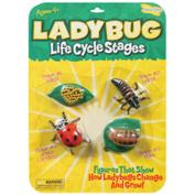 Life Cycle Stages Ladybug