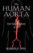 The Human Aorta