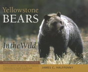 Yellowstone Bears in the Wild