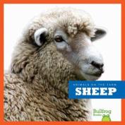 Sheep (Animals on the Farm