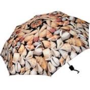 Harold Feinstein 4693461 Seashell Collapsible