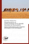 Morphometrie Et Endocrinologie de La Glande Thyroide Du Dromadaire [FRE]