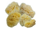 Aphrodite Sponge Value Pack #2