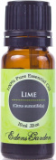 Lime 100% Pure Therapeutic Grade Essential Oil- 10 ml