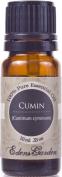 Cumin 100% Pure Therapeutic Grade Essential Oil- 10 ml