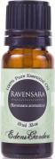 Ravensara 100% Pure Therapeutic Grade Essential Oil- 10 ml