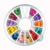 Nail Art Accessories Real Dry Dried Flowers 12 Colours Bundle Set in Wheel - Ready to Use by Winstonia