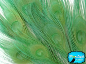 Peacock Feathers , Bleached and Dyed Peacock Tail Feathers; Lime Green Peacock Feathers; 5 Pieces Per Pack