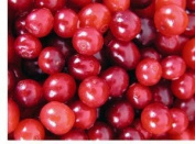 Cranberry Seed Oil 100% Pure Organic Cold Pressed 120ml