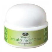 Cucumber Facial Cream Skin Health Care Moisturisers E