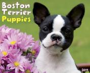 Boston Terrier Puppies Wall Calendar