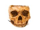 Satzuma Skull Hub