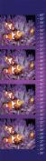 Clown Fish Canvas Growth Chart