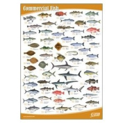 Seafood Wall Chart Set of 5