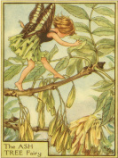 Green Frog Art Wall Decor, The Ash Tree Fairy