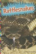 Rattlesnakes (Snakes (Amicus))