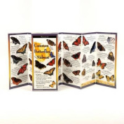 Common Butterflies of the Midwest (Coming May 2013)