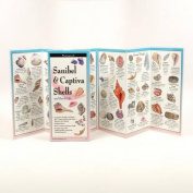 Sanibel & Captiva Shells & Beach Life