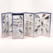 Sanibel & Captiva Birds