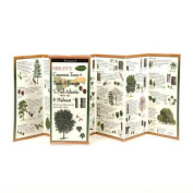 Sibley's Trees of Trails and Forests of the Mid-Atlantic & Midwest