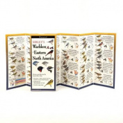 Sibley's Warblers of Eastern N. America