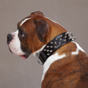 Petedge ZA6017 27 75 CC Deluxe Spiked Leather Collar 27 In Pink