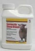 Durvet Key Items 001-1067 Ivermectin Sheep Drench 8 Ounce