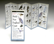 Steven M. Lewers& Associates LEWERSBNE154 Folding Guide Birds New England Coast
