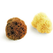 Natural Sea Sponge, Exfoliating Bahamas Grass Sponge 8.5cm / 3.5""