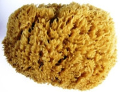 "Unbleached Sea Sponge 'Sea Wool', 10-12cm, Approx 4 - 4.7"" inches"
