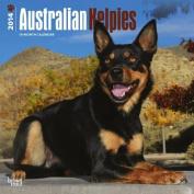 Australian Kelpies 2014 Wall Calendar