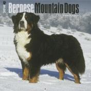 Bernese Mountain Dogs 2014 Wall Calendar