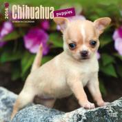 Chihuahua Puppies 2014 Wall Calendar