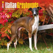 Italian Greyhounds 2014 Wall Calendar