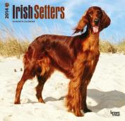 Irish Setters 2014 Wall Calendar